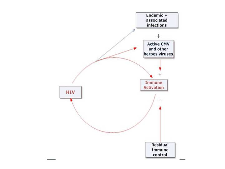the positive feedback interaction between hiv replication and immune  activation  hiv replication and immune activation reciprocally enhance each  other